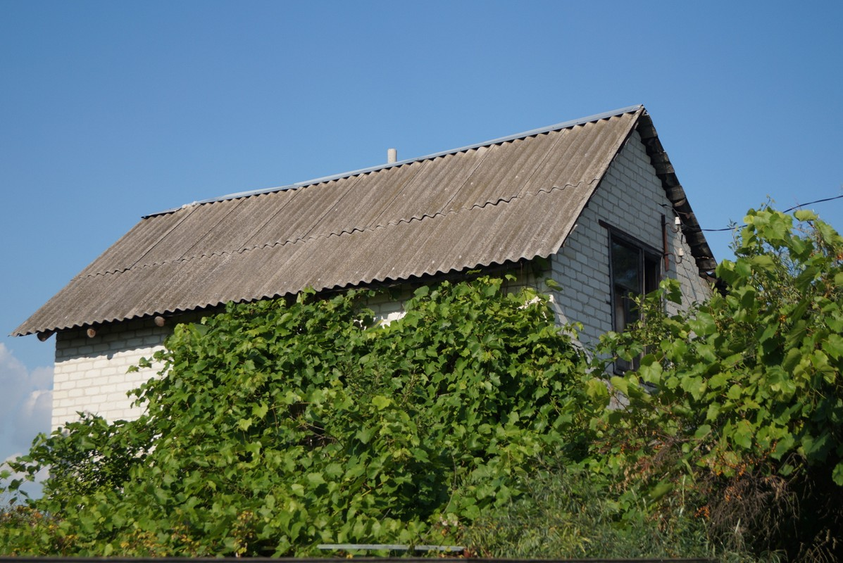 Старый Оскол. Дом и виноград. Виноградная лоза побеждает.
