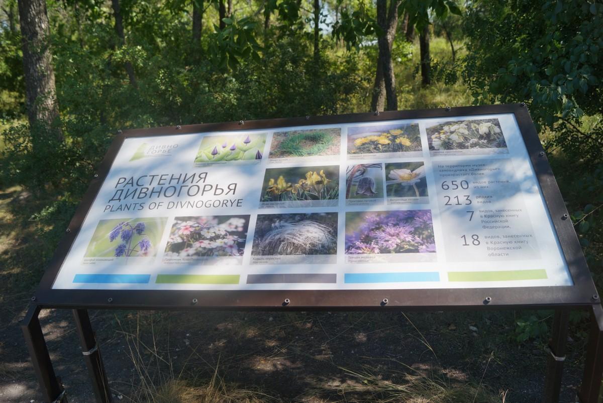 Стенд с редкими или типичными растениями Дивногорского заповедника.
