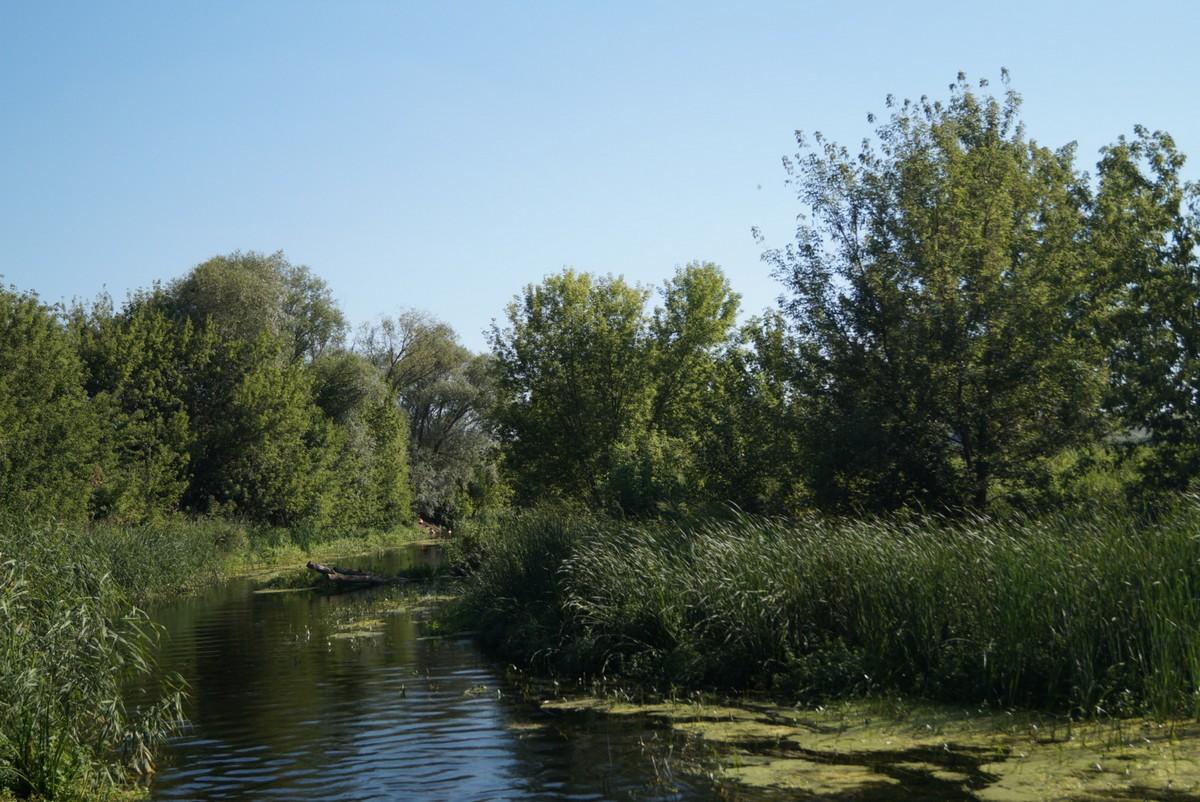 Дивногорье. Река Тихая Сосна.
