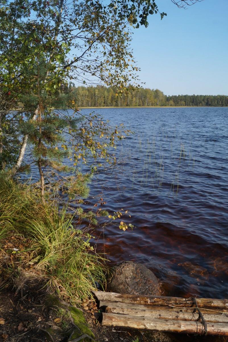 В Кирилловском. На Большом Красноперском озере. Сентябрь.