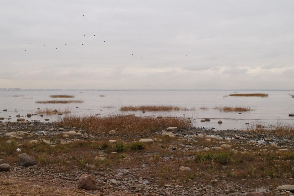 Ольгино. Сентябрьский Финский залив. Вода и камни.