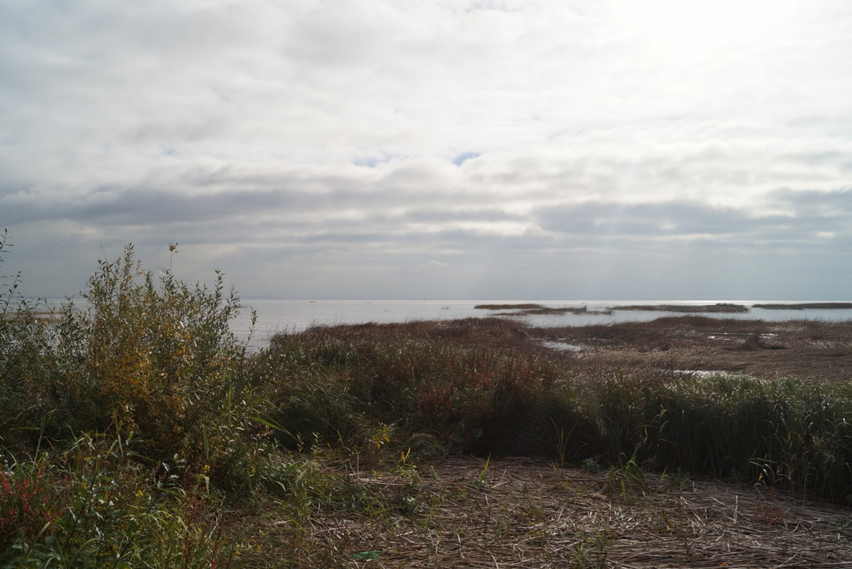Ольгино. На берегу Финского залива. Последний день сентября.