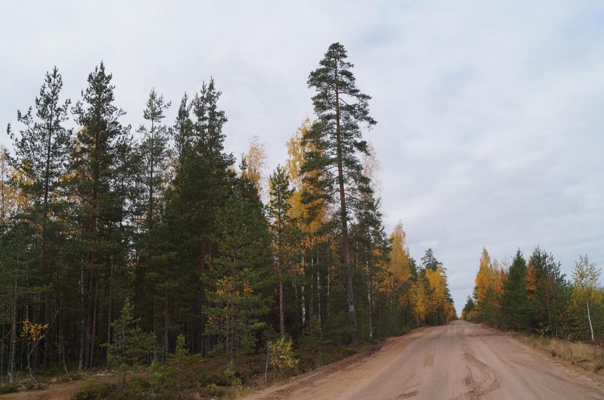 В Кирилловском. К дому. Осень - зеленая и желтая.