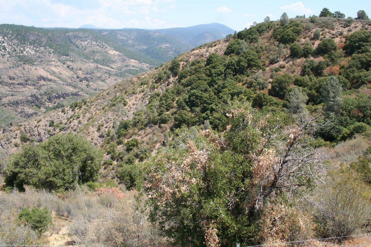Калифорния. По дороге к Каскадным горам. Холмы, поросшие редким лесом.