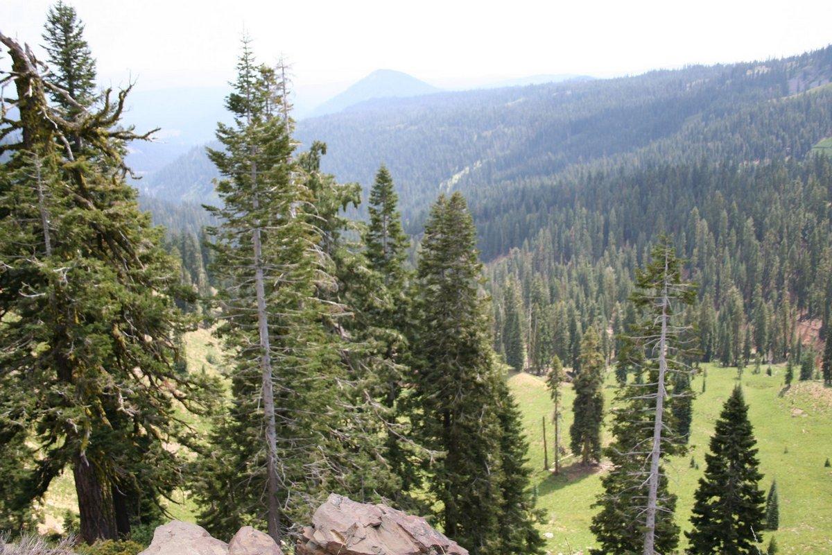 Калифорния. Лассен Волканик парк. Хвойная красота в горах.