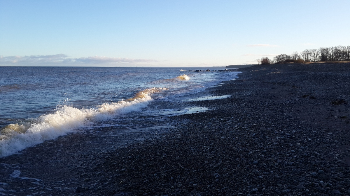 Эстония. Силламяэ. Заповедник Удрия.На берегу Финского залива. Начало ноября.