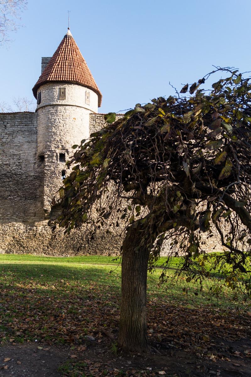 Таллин. Башня Талли и последняя ноябрьская листва.
