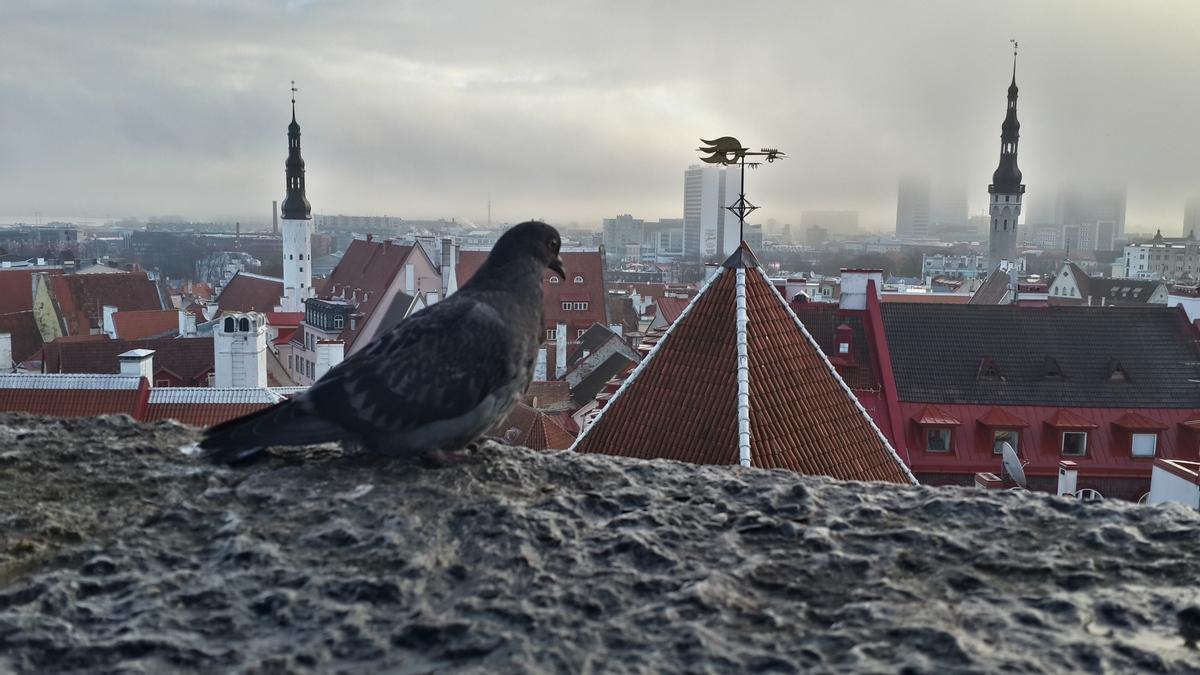 Таллин. Туманное утро. Вид на церковь Святого Духа, верхушку Надвратной башни с бойцовым петухом и Ратушу со Старым Томасом.