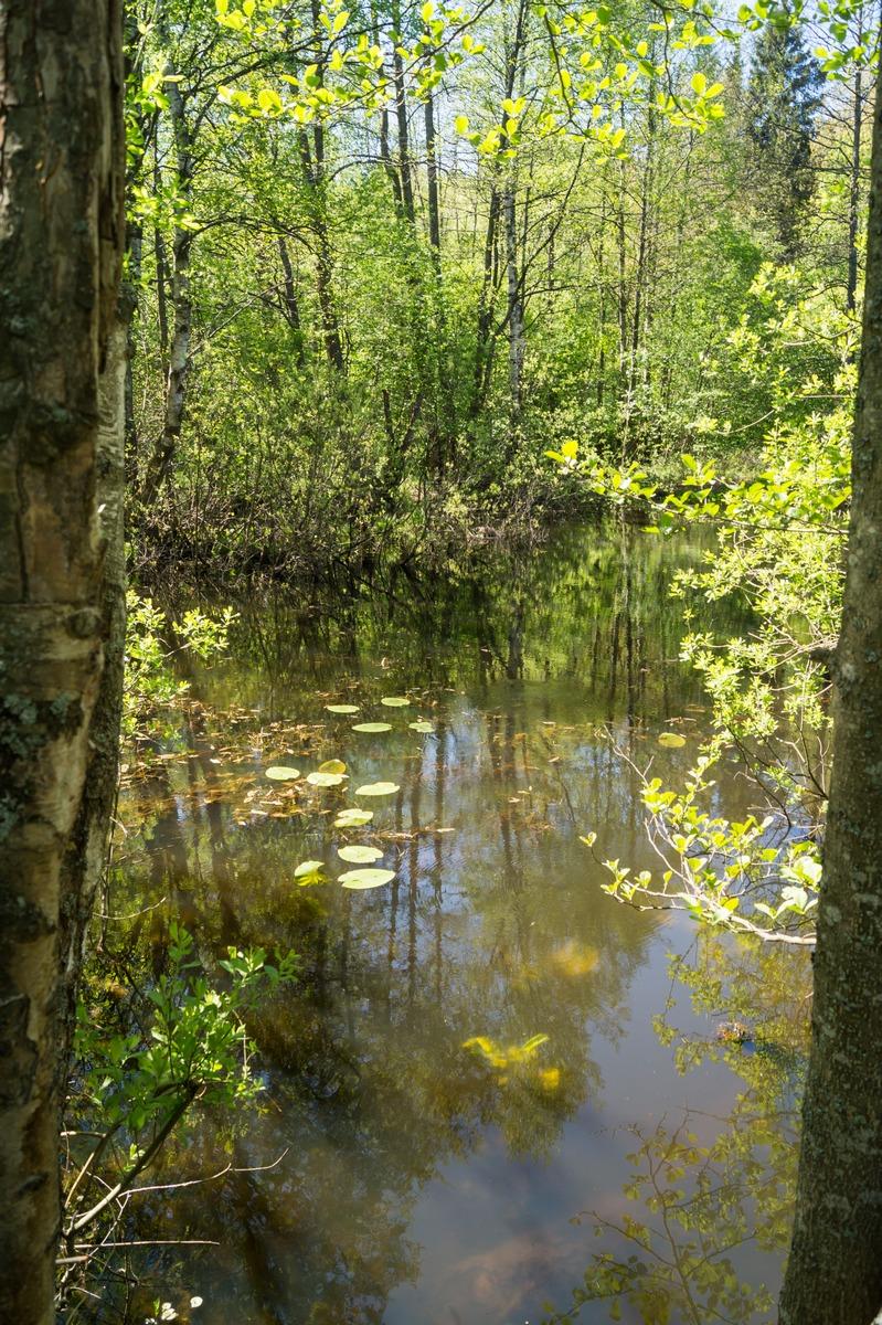 У Петровского пруда в Конной Лахте.