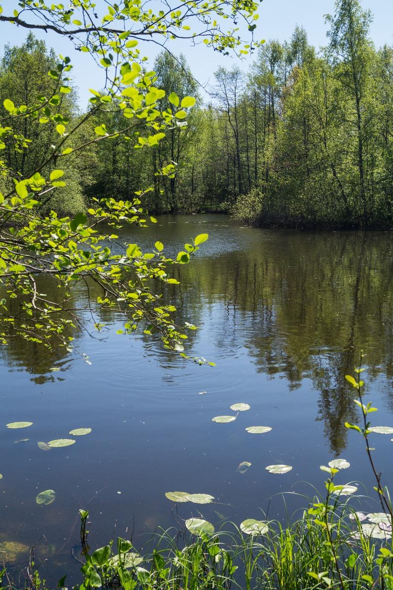 Петровский пруд в начале лета.