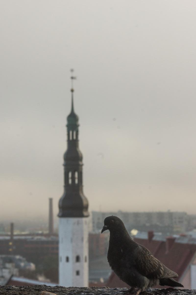 Таллин. Туманное утро. Вид церковь Святого Духа.