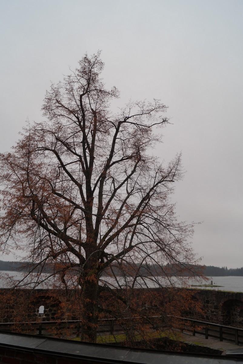Финляндия. В крепости Олавинлинна. Дерево крепости.