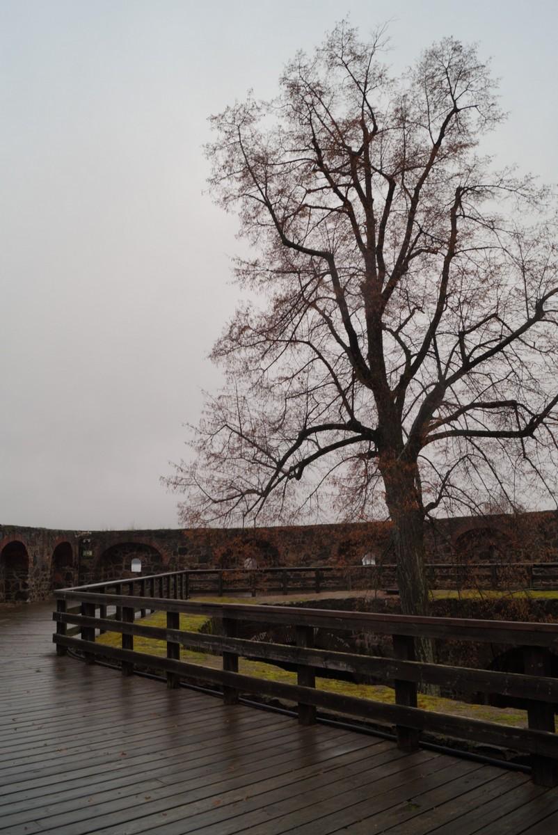 Финляндия. В крепости Олавинлинна. На втором ярусе крепости. И большое дерево как символ.