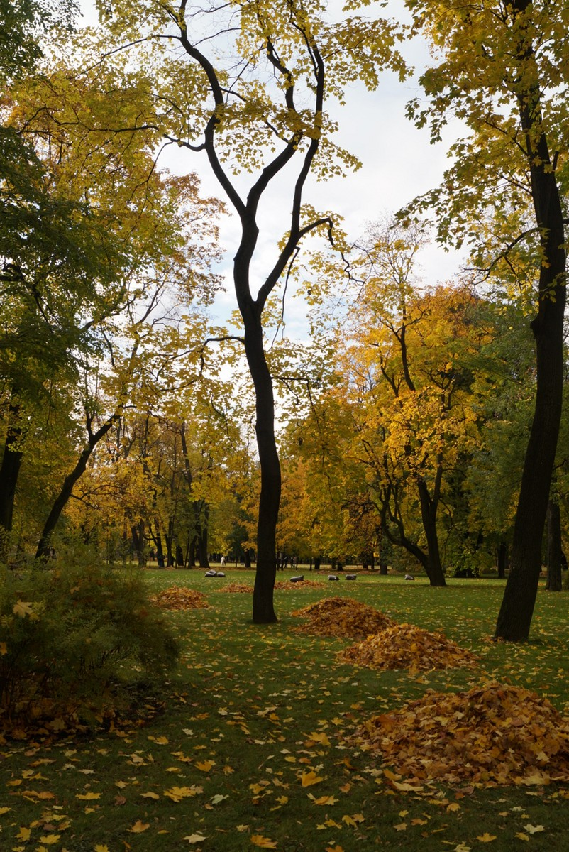 Михайловский сад в октябре. Опавшая листва.