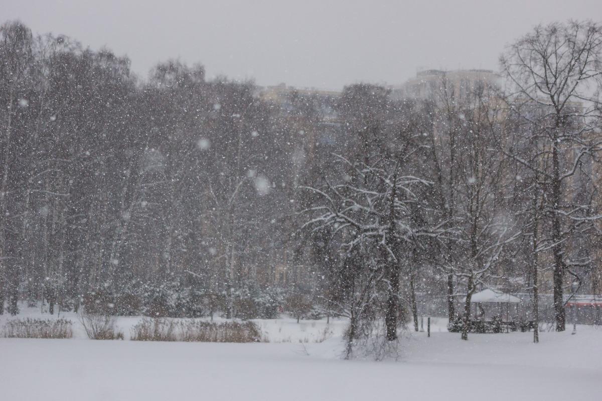Снегопад в Удельном парке. У пруда.