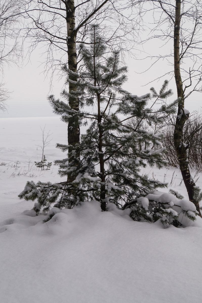 Ольгино. На берегу Финского залива. Зимнее настроение. Февраль.