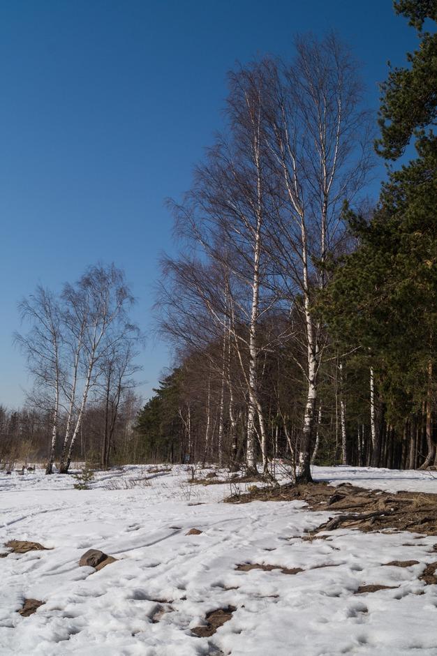 Ольгино. На берегу Финского залива. Весна идет...