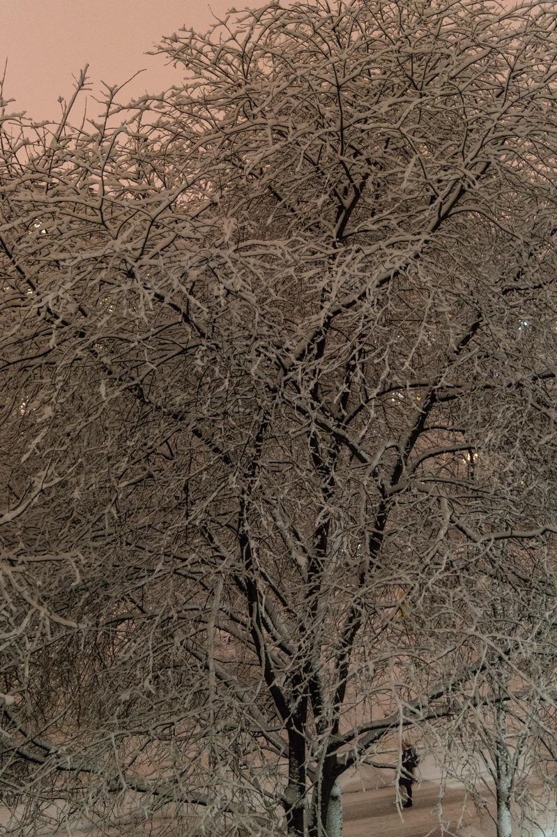 Мартовский снег на деревьях.