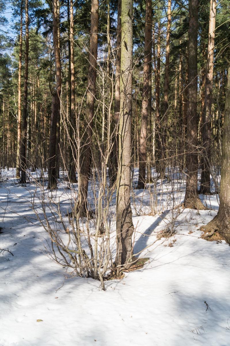 Ольгино. На берегу Финского залива.В весеннем лесу...