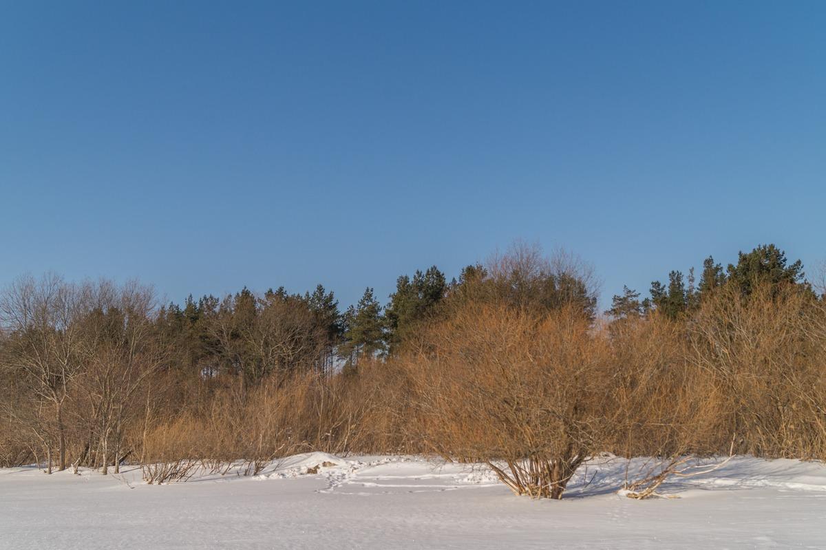 Эстония. На Чудском озере. Пока еще не зеленый берег.