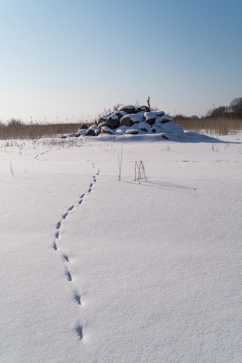 Эстония. На Чудском озере. Следы, ведущие к каменному кургану.