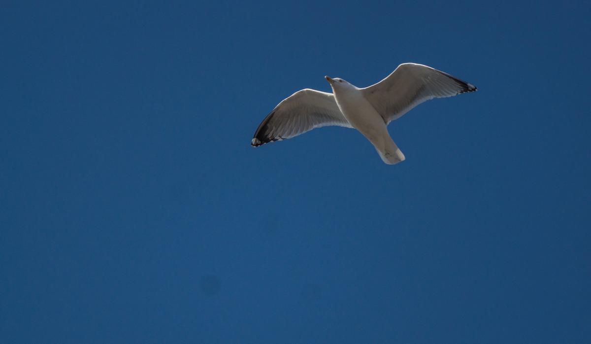 Рига. Небо. Воздух свободы. Чайка на дежурстве.